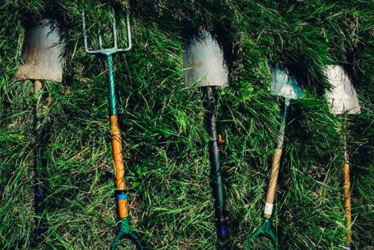 Субботники и посадки леса с Собиратором